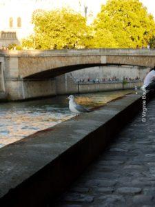 Quais Saint-Michel notre Dame, Paris, France ©Virginie Boullé