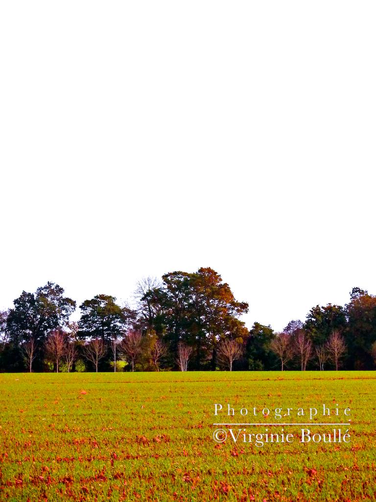 Bretagne novembre 2011 1