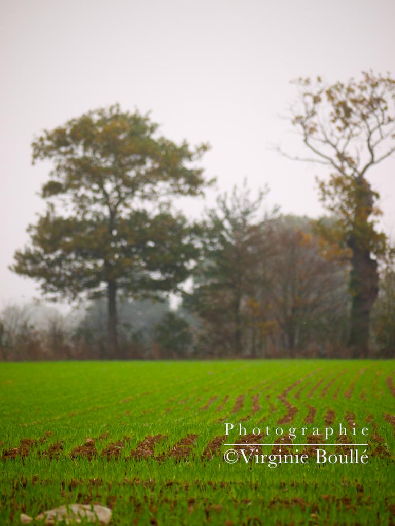 Bretagne novembre 2011 2