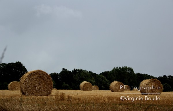 campagne_5