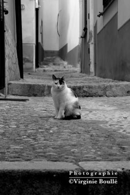 Sicile . Etna