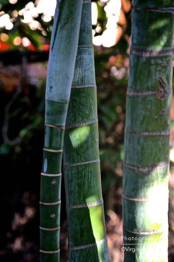 Koh Samui, Thaïlande, Bambou ©Virginie Boullé